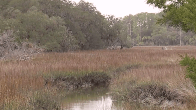 Georgia's 'Runaway Negro Creek' to be renamed 'Freedom Creek'